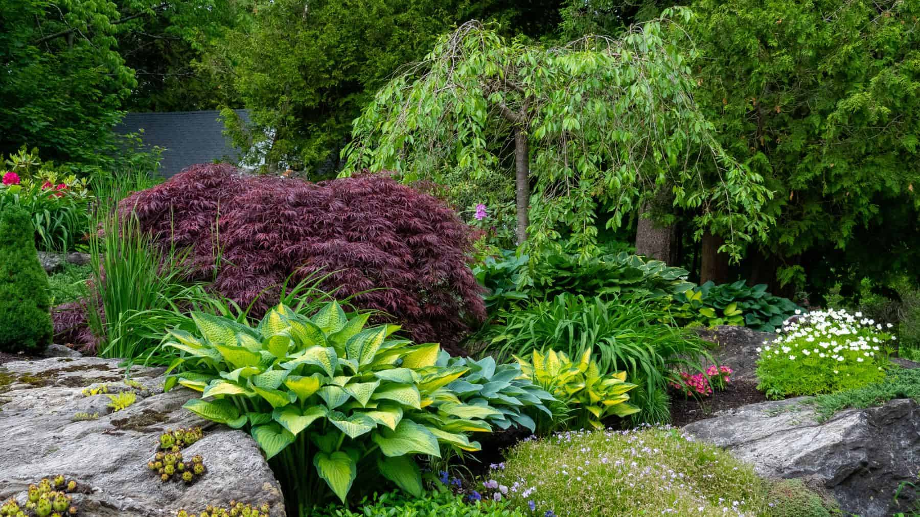 Rock garden with hostas, Japanese Maples and other plants
